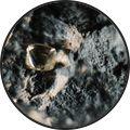 Rough-diamond-in-kimberlite-Ben-Perry-De-Beers_cb5e51f64baccefb3970f1c00b6c1fc1.jpg