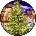 christmas-tree_7ec3ec24aa588eee544efb370b6dd704.jpg